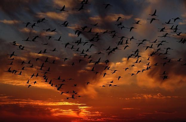 https://pixabay.com/pl/flamingi-r%C3%B3j-ptaki-natura-1619415/