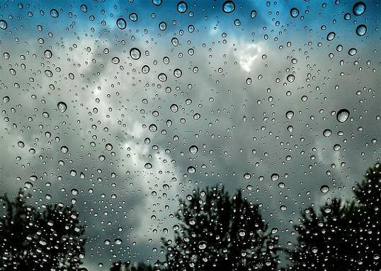 Deszczowe Wiersze Jadwigi Zgliszewskiej Podlaski Senior