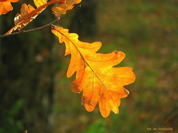Jesiennieje moja samotność – wiersze Jadwigi Zgliszewskiej