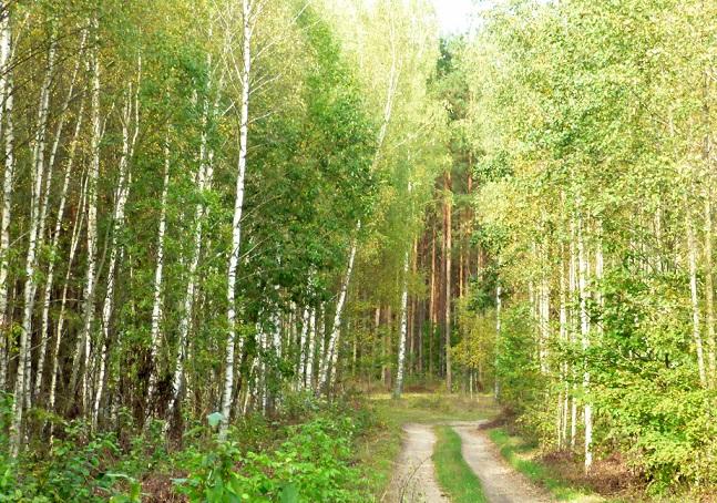 Las, mój pomnik – wiersz Wiesława Lickiewicza