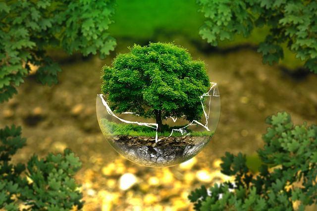Dbajmy o drzewa