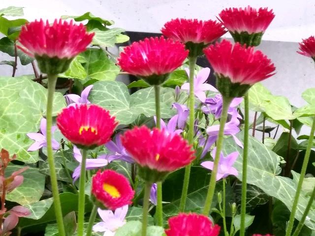 W feerii czerwcowych barw, dźwięków i woni – wiersze Bernadyny Łuczaj