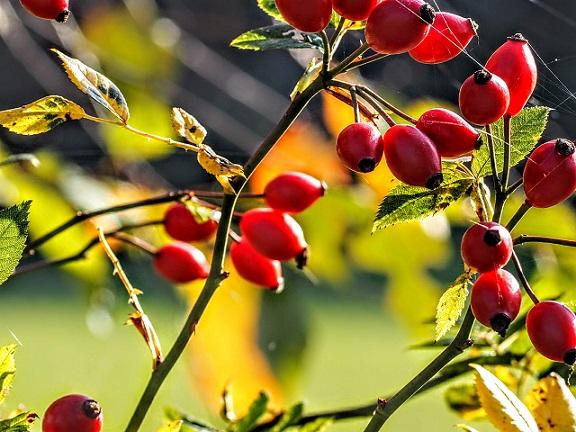 Co Lubię Jesienią Wiersze Teresy Kreczko Suproń Podlaski