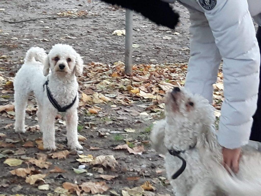 Mój pies i ja mamy tu swoich przyjaciół