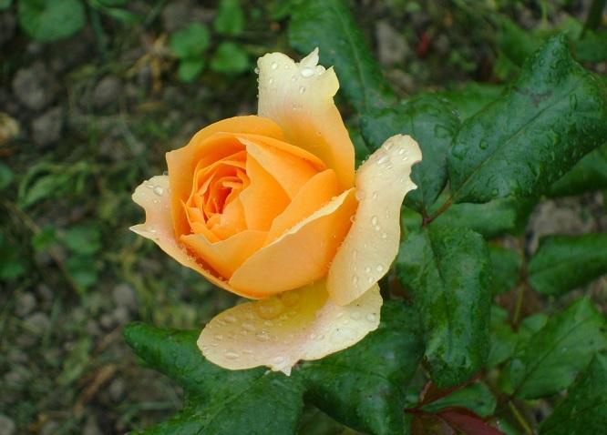 W deszczu wiosennych słów – wiersze Podlaskich Poetów