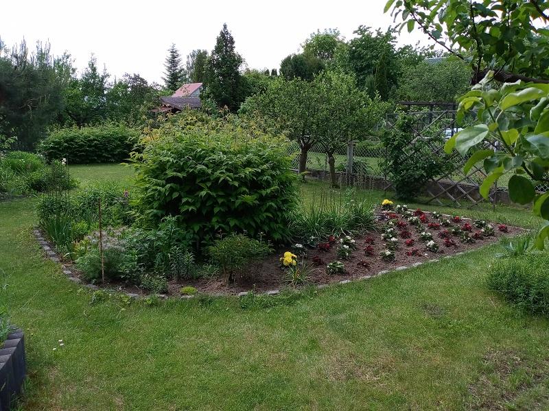 Ogród leczy – hortiterapia