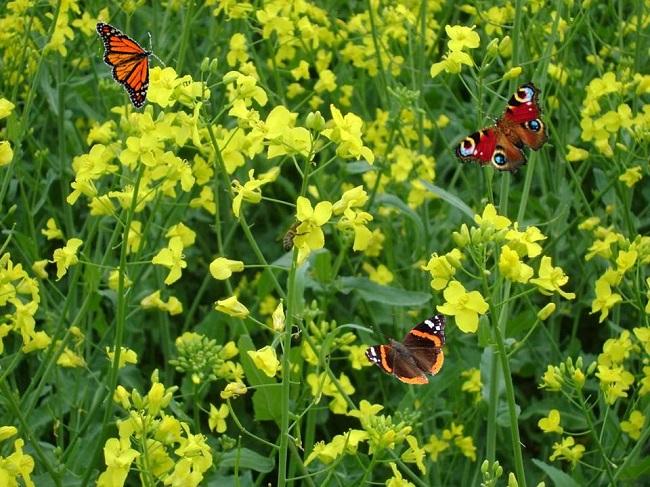 Wiosenny poranek – wiersze Zofii Jakubowskiej
