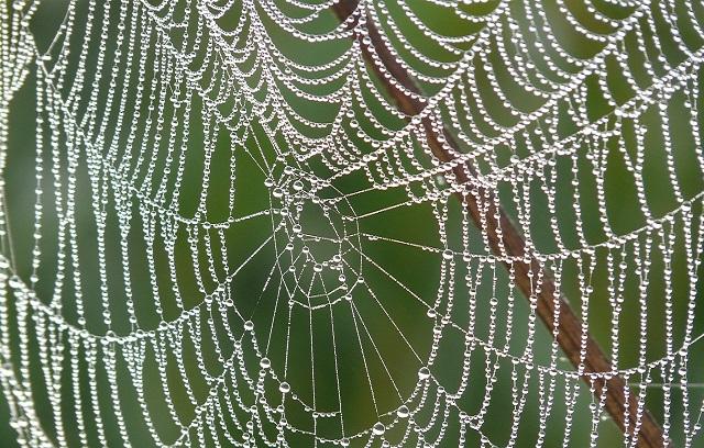 Sklejanie pajęczyny – przesłanie Stanisława Kasei