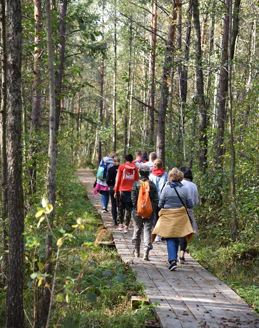 Kładka przez las olsowy